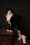 Happy National Black Cat Appreciation Day!