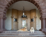 Photo Compositing in Pet Photography