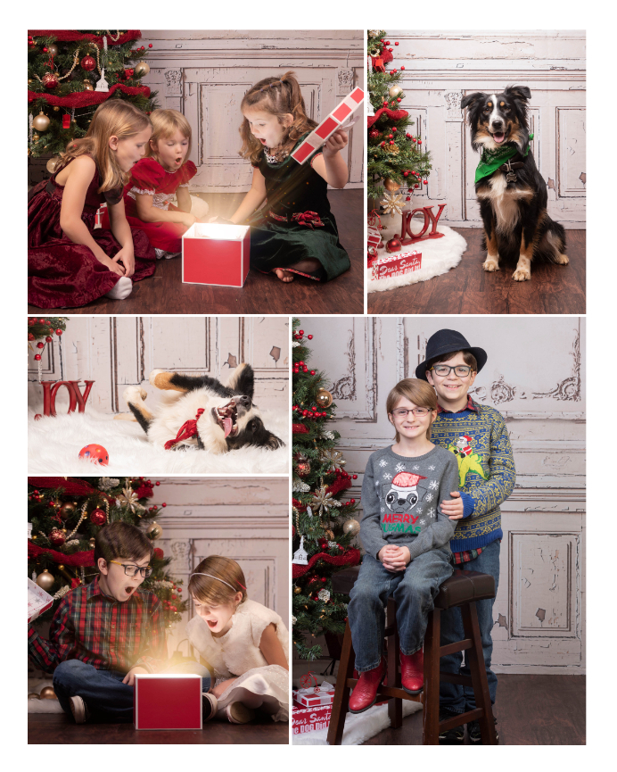 Christmas pet portraits, Christmas kids pictures, knoxville pet portraits, noelle bell photography